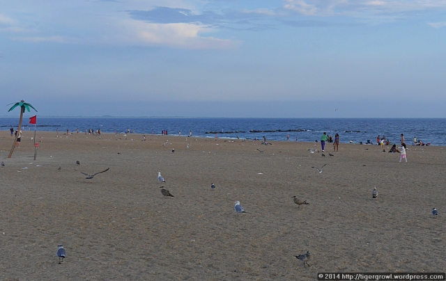 The beach, shared by people and birds